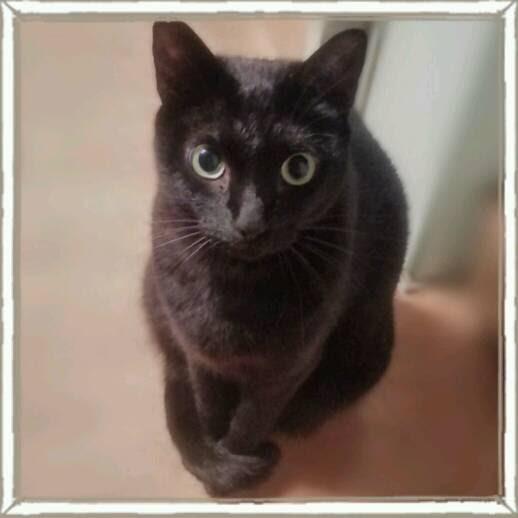 猫でもブラッシングは嫌いじゃないですの画像